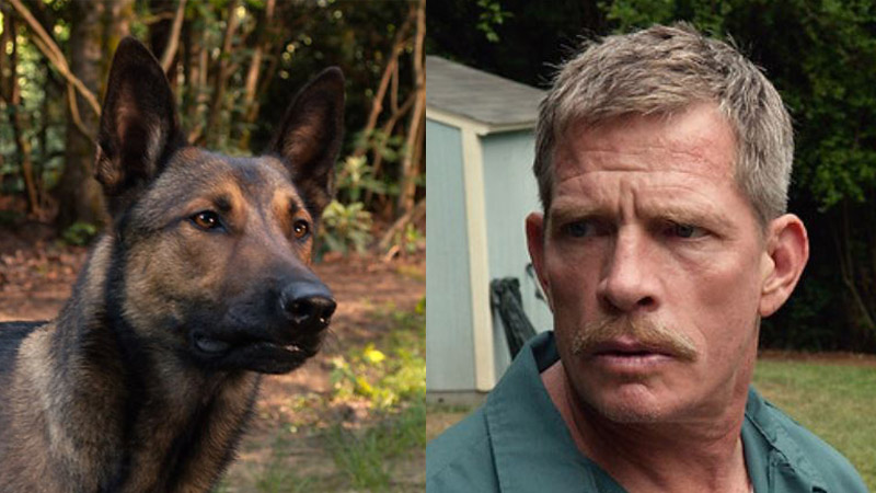 Carlos the dog and Thomas Haden Church in 'Max' (photo: Warner Bros.)
